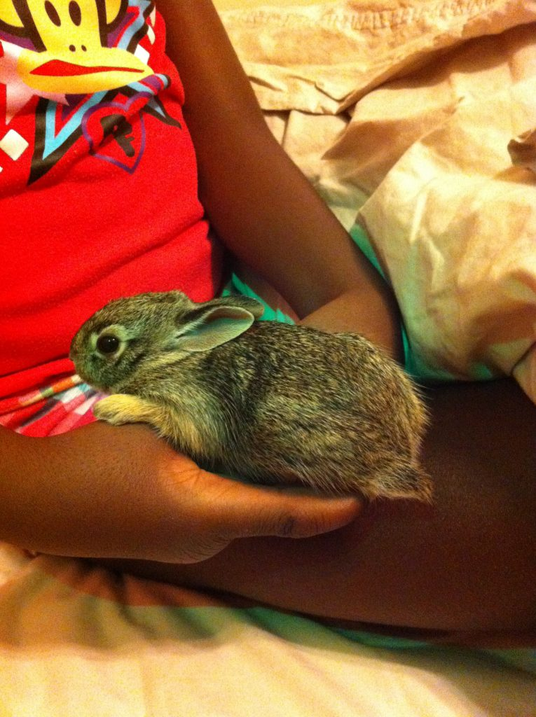 The whole baby bunny fit in her hand!