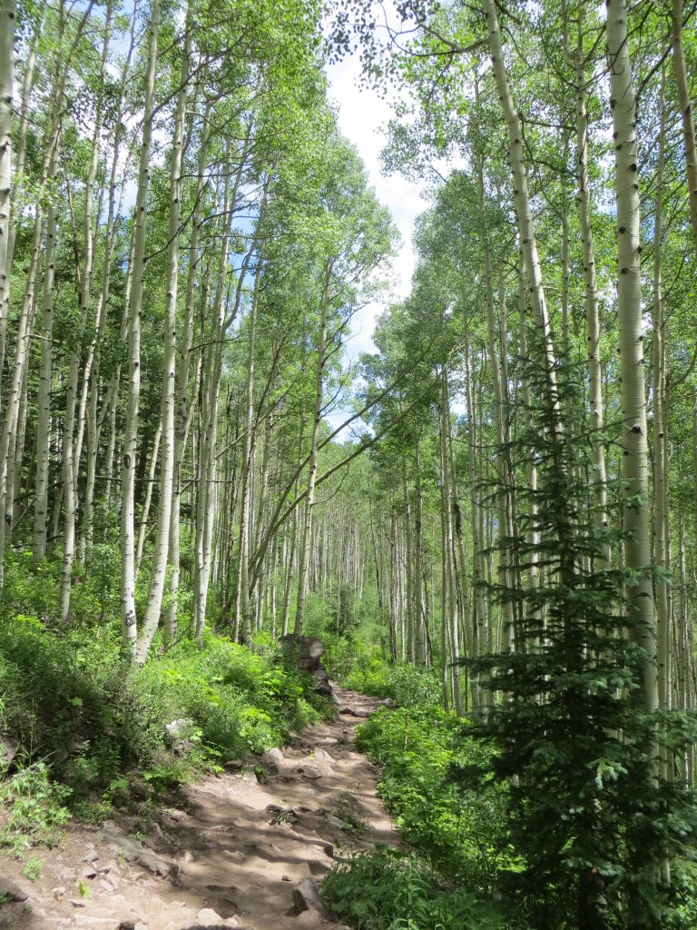 The Aspen trees here are beautiful, their leaves all shimmery when the wind blows, and the white trunks like slender white columns, lining our path.